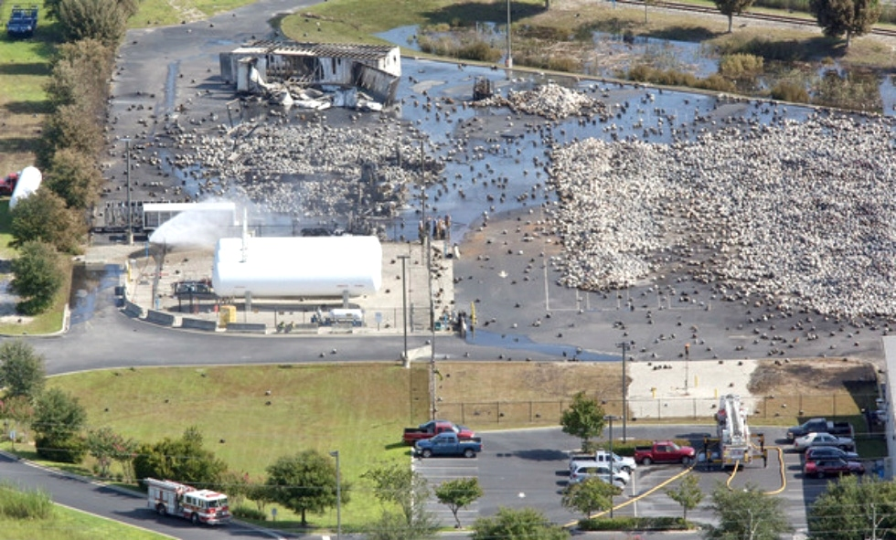 Orlando Sentinel Photos by Red Huber Photographer Red Dog Helicopters